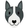 Rekonvalescence psů