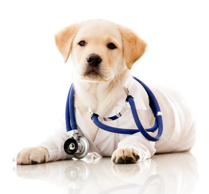 Zdraví a péče o psy