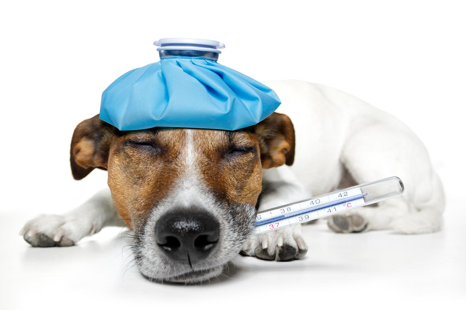 Péče o zdraví psa